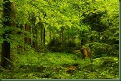 Kopie von Freieck Kapfenhardt - Der Schwarzwald 200m weiter