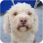Johnny is from the San Francisco SPCA. To learn more about Johnny, click on the link to the shelter below.