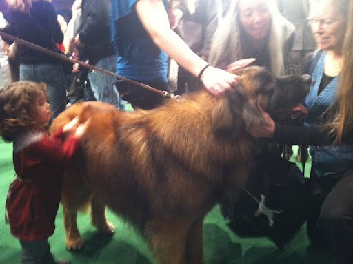 Leonberger 'Dozer' meets his fans!