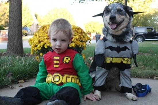 Gatos_caes_Batman14