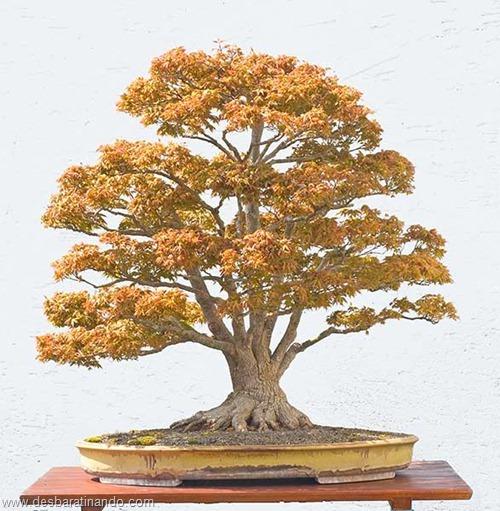 bonsais arvores em miniatura desbaratinando (80)