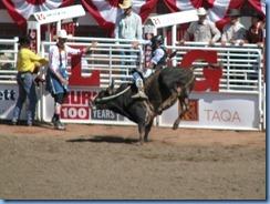 9503 Alberta Calgary - Calgary Stampede 100th Anniversary - Stampede Grandstand - Calgary Stampede Bull Riding Championship