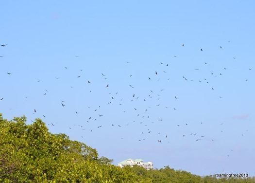 Flock of Turkey Vultures
