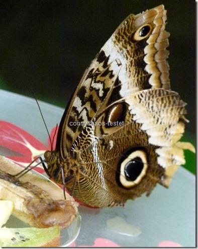Schmetterlingshaus Biosphäre Potsdam