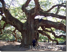 Angel Oak SC 4
