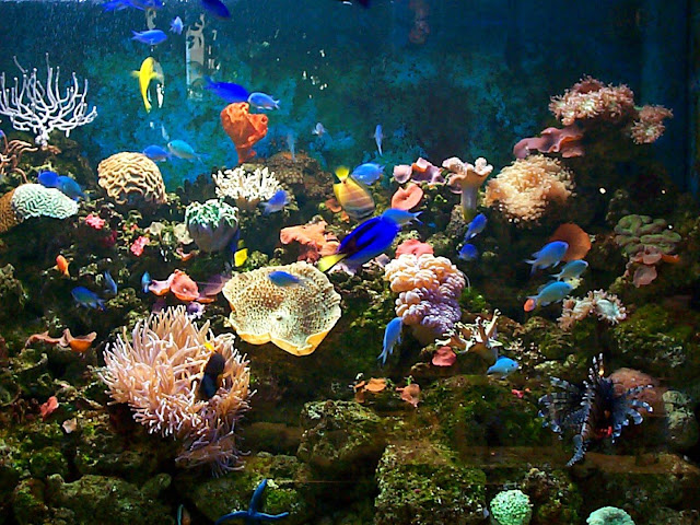 Great Barrier Reef Coral Garden Reef Encounter Scuba Dive and Snorkel trips.jpg