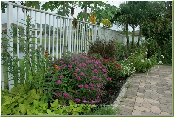 Southeast florida garden evolvement: my garden: two years later
