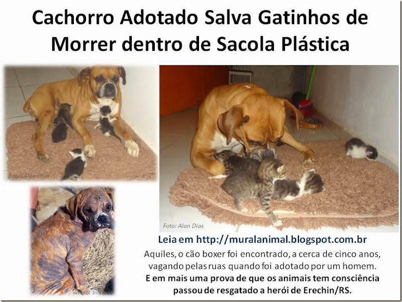 Cachorro Adotado Salva Gatinhos de Morrer dentro de