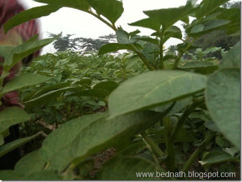 bed nath blog (17)