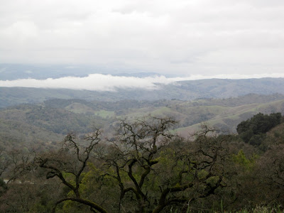 one last look at Henry W. Coe State Wilderness