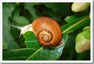 snail2