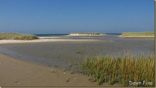 Birding south beach_080