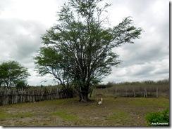 Ana Loureiro - Fazenda Turco em Delmiro Gouveia - 1954 Algaroba - Trabalhada com nome