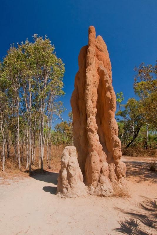 magnetic-termites-2