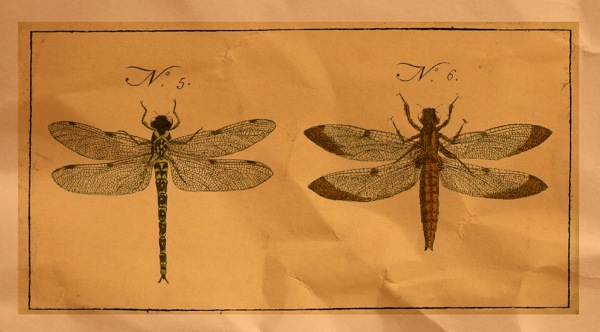 Dragonfly scan brownbag