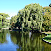 The pond at Boston Common
