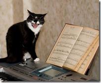 gato pianista blogdeimagenes (11)