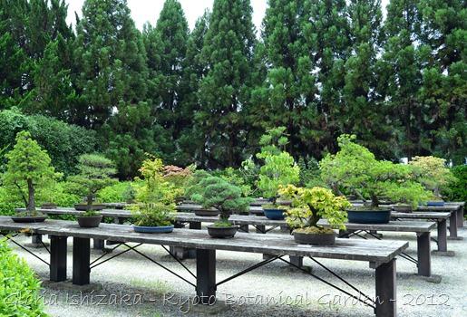 Glória Ishizaka -   Kyoto Botanical Garden 2012 - 40