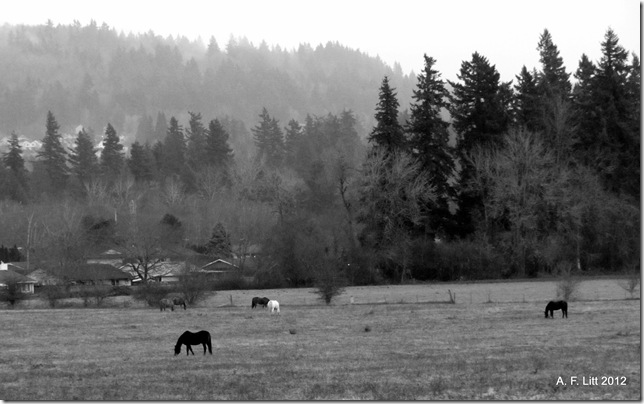 East Buttes.  Gresham, Oregon.  December 18, 2011.  Photo of the Day, March 2, 2012.