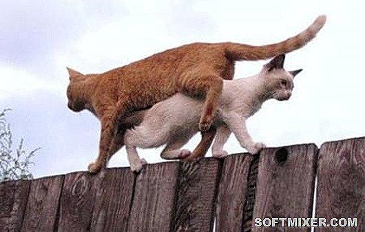 Кошачьи-приколы
