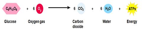 Aerobic Respiration Formula