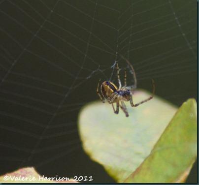 4-spider-1