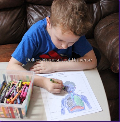 Dotties homeschool universe human body respiratory system we then read a tour of your respiratory system a cute book in a comic strip format that covered the information quickly and simply i believe they have ccuart Choice Image