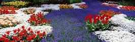 flower panoram_nebesnoe.info_05.jpg
