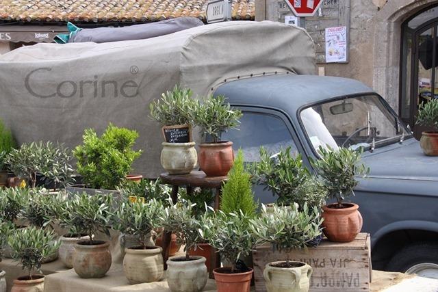 olijfboompjes