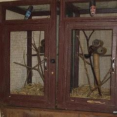 Lemurs Park::IMGP4470