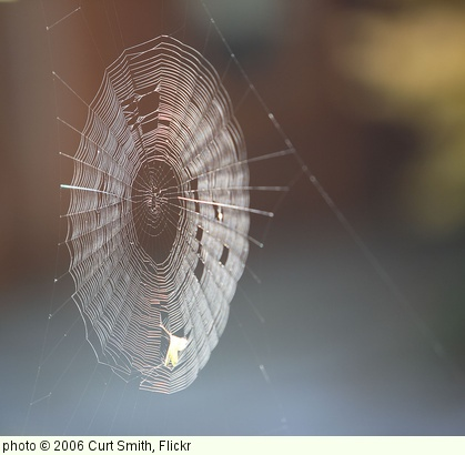 'spider web' photo (c) 2006, Curt Smith - license: http://creativecommons.org/licenses/by/2.0/