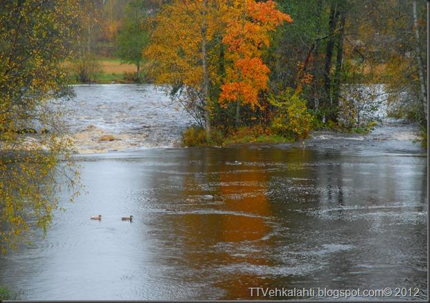 syksy alkukulku tulva 032