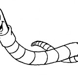 caterpillar-coloring-page.jpg