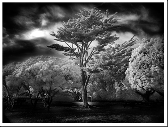 Mitch_Dobrowner_Wind_Swept_Tree