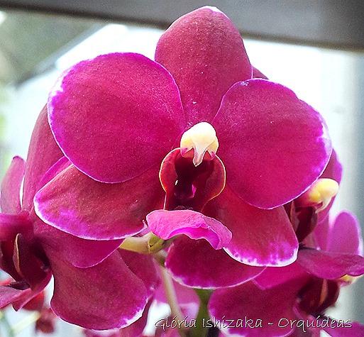 Glória Ishizaka - orquideas 1