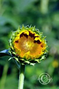 cr-new-flower-wb-372