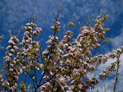 Springtime in Patagonia, Argentina.