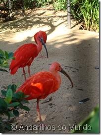 Guarás Íbis-Vermelhos Íbis Parque das Aves Foz do Iguaçu BlogTurFoz