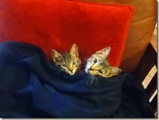 11-29 cats at cabin