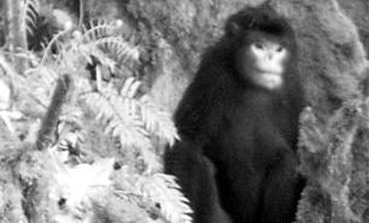 Amazing Pictures of Animals, photo, Nature, exotic, funny, incredibel, Zoo, Myanmar snub-nosed monkey, Alex (4)