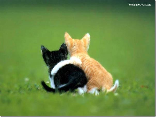 Aquele abraço!