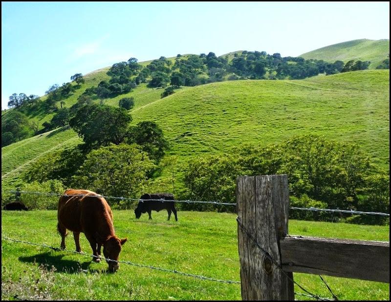 Antioch Green Hills Springtime 017 (800x617)