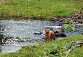 Dogs Trekking 6 (172)