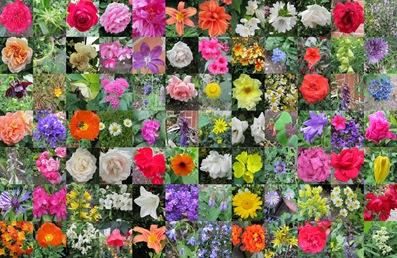 Blühender Garten Mitte Juni