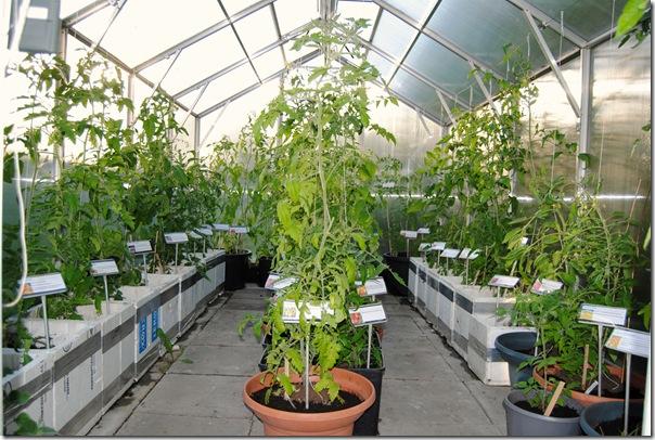 Botanisk hage og hagen i juni -12 018
