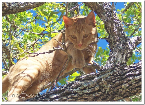 Aslan_Tree_2