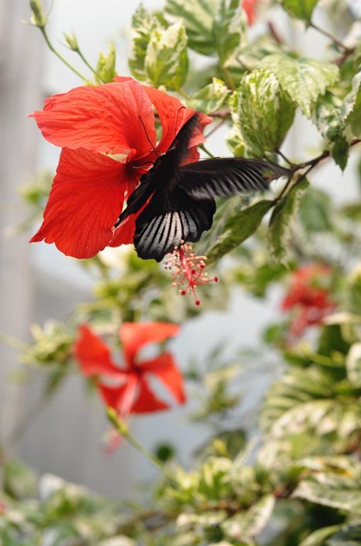 Botanical Garden 018
