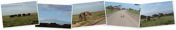 Vis Amboseli