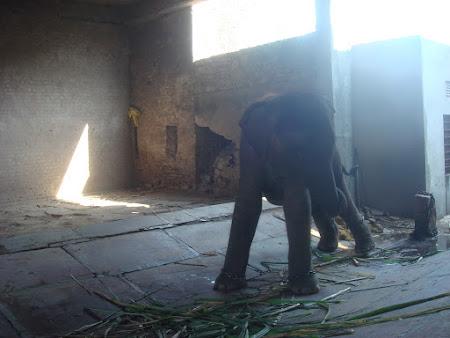 Imagini India: elefanti
