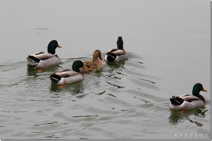 台南新營-天鵝湖環保水上公園